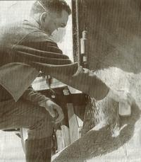 Erwin Beintema neemt een monster van een bij graanhandel Pars in Sint Jacobiparochie aangevoerde partij tarwe.